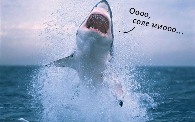 Tiburon blanco saltando