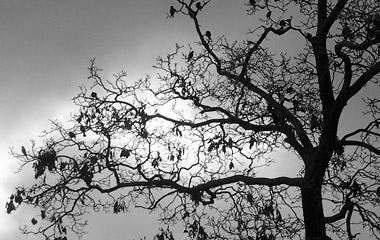 В сянката